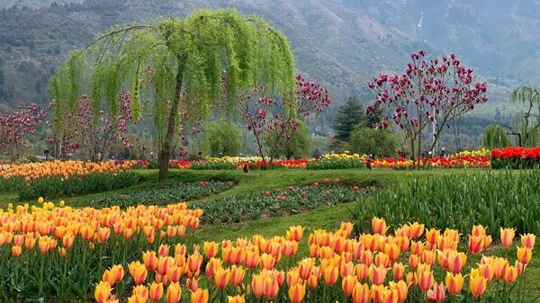 Whenever you get the opportunity, do visit Jammu and Kashmir and witness the scenic Tulip festival - Sputnik International