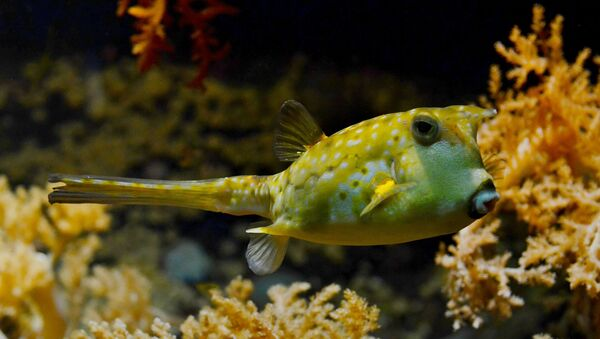 Pufferfish - Sputnik International