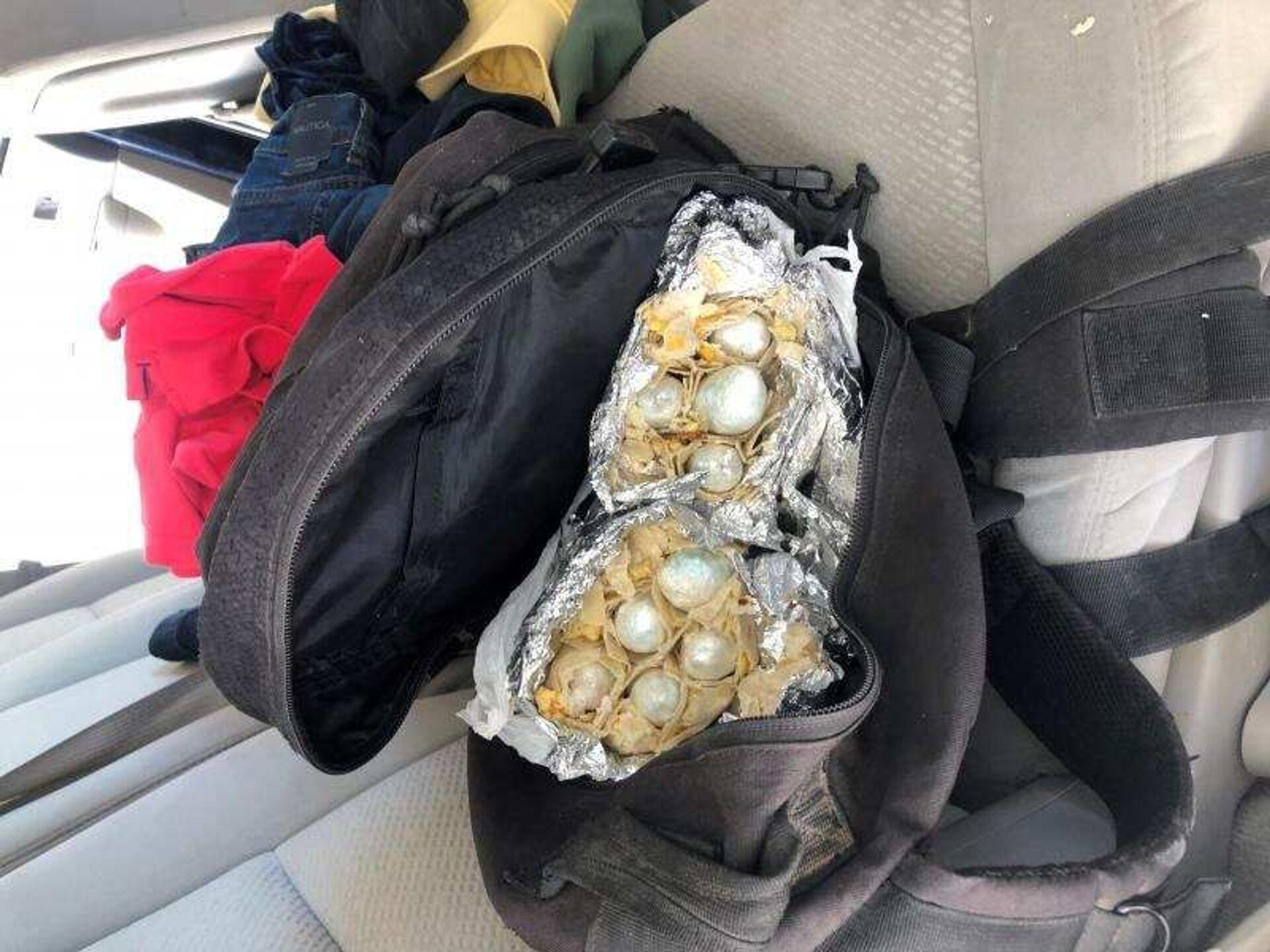 That's a Wrap: CBP Canine Sniffs Out $60K Worth of Fentanyl Stuffed in Burritos - Photo - Sputnik International, 1920, 31.03.2021