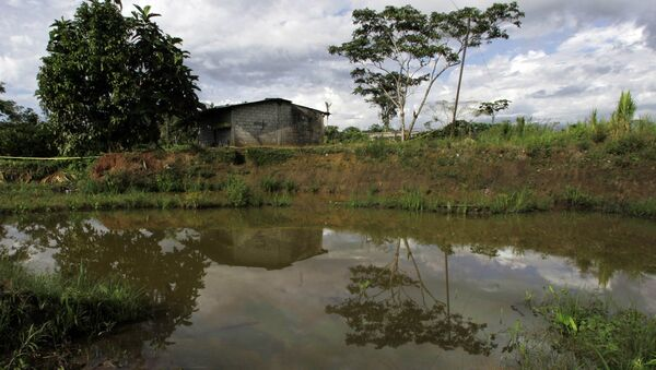 Oil floats in the water near a home in Lago Agrio, Ecuador on Aug. 4, 2008. Ecuador's President Rafael Correa has sided squarely with the 30,000 plaintiffs, Indians and colonists, in a class-action suit, dubbed an Amazon Chernobyl by environmentalists, over the slow poisoning of a Rhode Island-sized expanse of rainforest with millions of gallons of oil and billions more of toxic wastewater. - Sputnik International