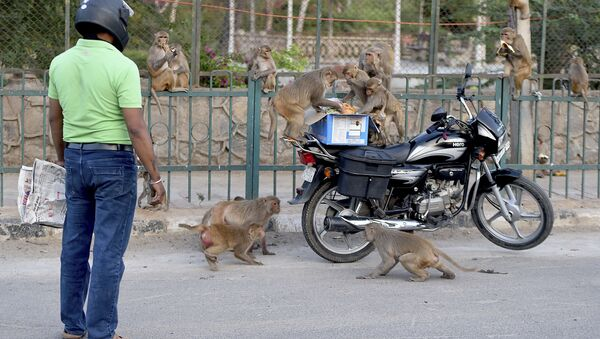A man feeds monkeys during a government-imposed nationwide lockdown as a preventive measure against the COVID-19 coronavirus in New Delhi on April 10, 2020 - Sputnik International