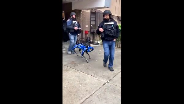 Screenshot captures moment that officers with the New York Police Department tapped on the services of a Boston Dynamics Digidog during a dispatch response to a Manhattan public housing residence. - Sputnik International