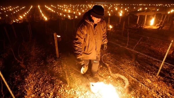 Chablis winemakers light up candles, heaters to save vines from frost outside Chablis - Sputnik International