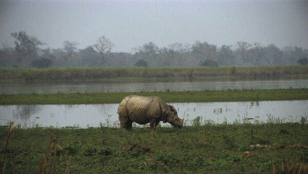 Kaziranga National Park is situated on the south bank of the Brahmaputra river in Assam, India. - Sputnik International