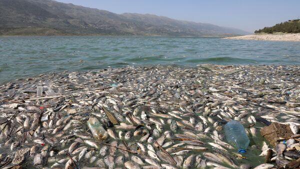 Dead fish are seen floating in Lake Qaraoun on the Litani River, Lebanon April 29, 2021. - Sputnik International