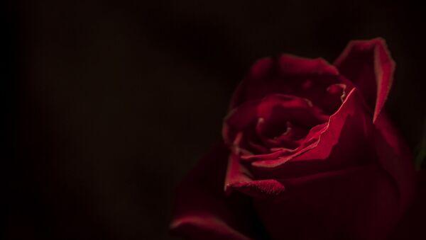 Rose death - Sputnik International