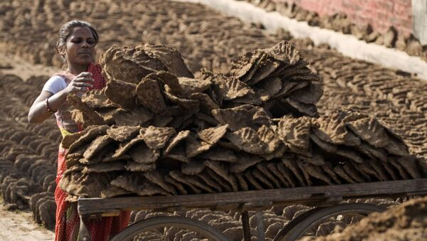 An Indian woman loads in a cart cow dung cakes, for use as cooking fuel in Allahabad, India, Wednesday, Jan.28, 2009 - Sputnik International