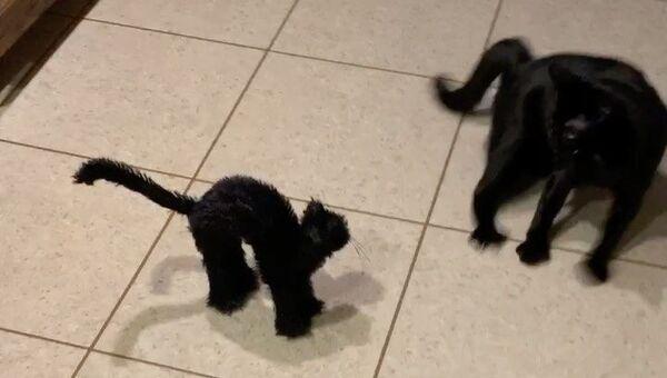 black cat - Sputnik International