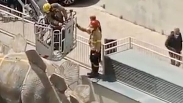Newly surfaced cellphone footage captures the moment in which first responders are working to remove the corpse of a 39-year-old man who was found inside a papier-mâché dinosaur statue. - Sputnik International
