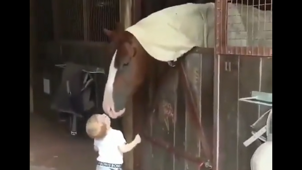 Toddler Greets Horses With Kisses In a Stable - Sputnik International