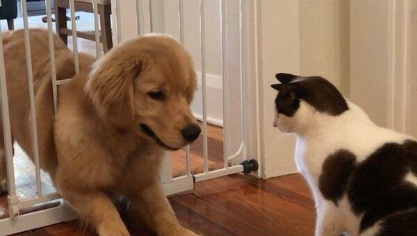 cat and dog - Sputnik International