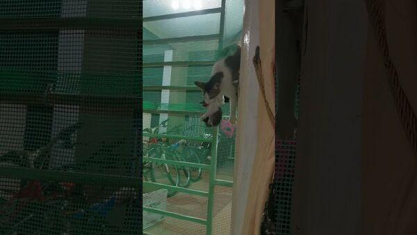 Cat Climbs Through Gate With Her Kittens || ViralHog - Sputnik International