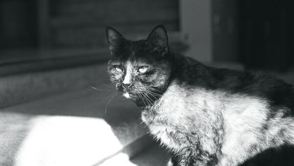 Devious Cat Face - Sputnik International