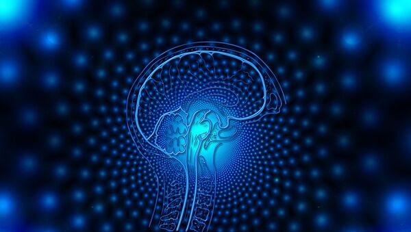 brain - Sputnik International