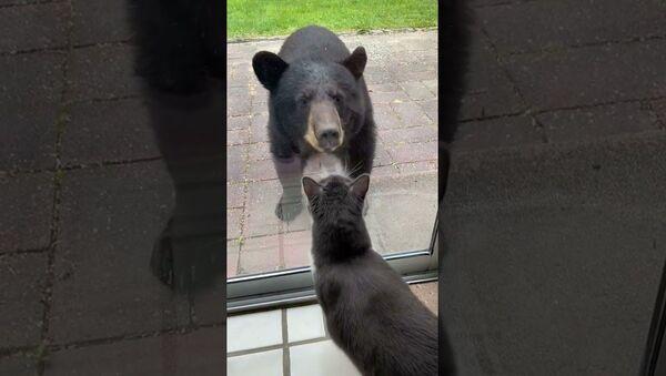 Young Bear Meets Bella the Cat    ViralHog - Sputnik International