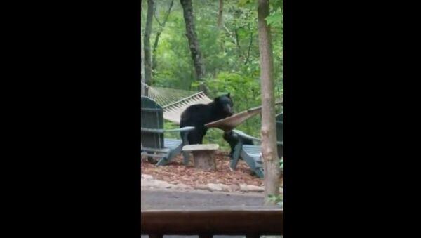 Bear Family Has Fun in Hammock || ViralHog - Sputnik International