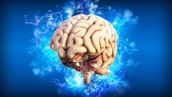 Brain. - Sputnik International
