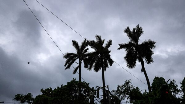 A bird flies past coconut trees under the inclement weather due to Cyclone Yaas in Kolkata, India,  - Sputnik International