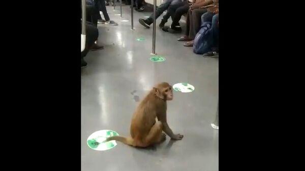 Monkey Takes a Fun Ride in Delhi Metro - Sputnik International