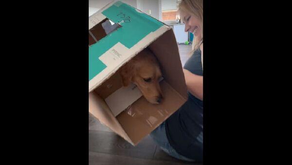Clever Dog Wins the Hotdog Game at a Cost    ViralHog - Sputnik International