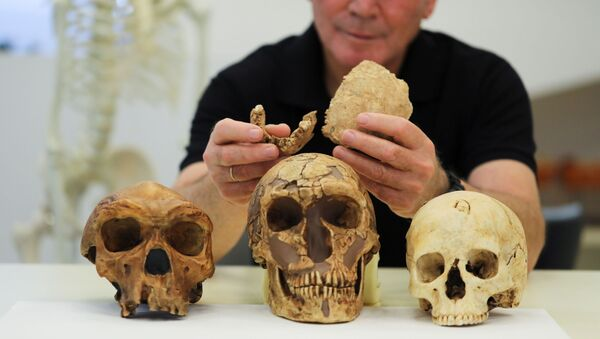 Tel Aviv University Professor Israel Hershkovitz, holds what scientists say are two pieces of fossilised bone of a previously unknown kind of early human discovered at the Nesher Ramla site in central Israel, during an interview with Reuters at The Steinhardt Museum of Natural History in Tel Aviv, Israel June 23, 2021. - Sputnik International