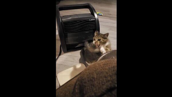 Cat Battles Cold Airflow    ViralHog - Sputnik International