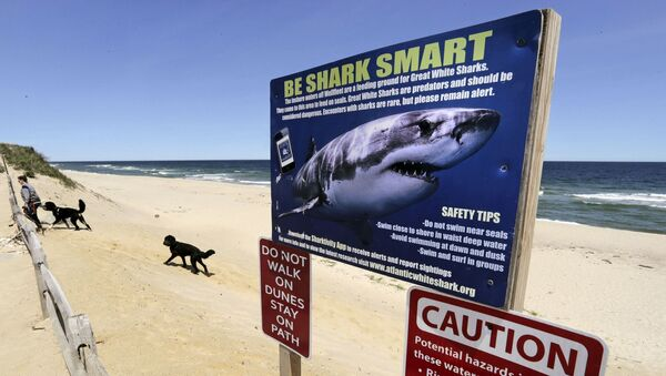 In this May, 22, 2019, file photo, a woman walks with her dogs at Newcomb Hollow Beach in Wellfleet, Mass., where a boogie boarder was bitten by a shark in 2018 and later died of his injuries. - Sputnik International