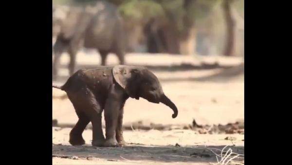 Baby Elephant Walking - Sputnik International