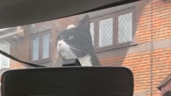 Cat Does Not Give Up - Sputnik International