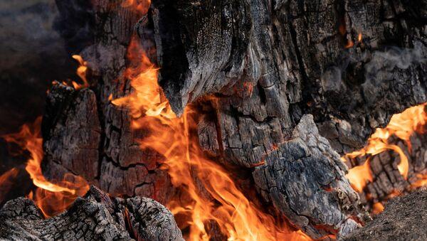 A stump burns in an area hit hard by the Bootleg Fire near Bly Oregon, U.S., July 19, 2021. - Sputnik International