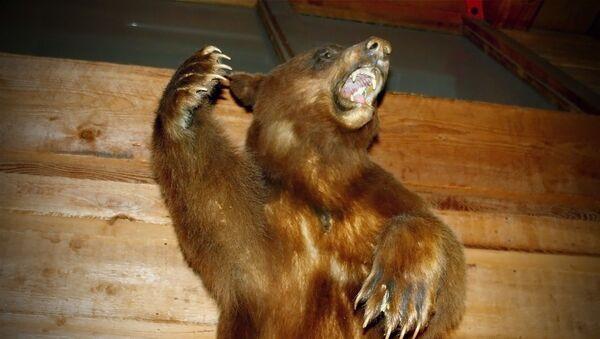 Grizzly bear - Sputnik International