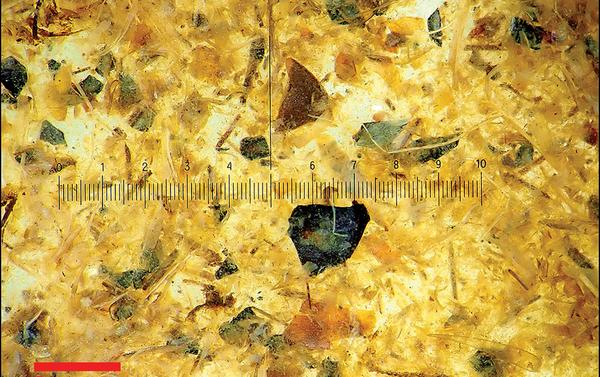 Photomicrograph of Tollund Man's gut content (photograph by P.S. Henriksen, the Danish National Museum). - Sputnik International