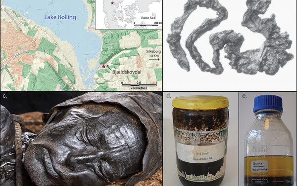 a) Map showing the location of Tollund Man's discovery in Bjældskovdal (figure by N.H. Nielsen, Museum Silkeborg; contains data from the Danish Geodata Agency); b) Tollund Man's large intestine (photograph courtesy of the Danish National Museum); c) the well-preserved head of Tollund Man (photograph by A. Mikkelsen); d) the original honey glass jar in which the contents of the large intestine were kept until 2018; e) the remaining 140ml of the large intestine content (d–e photographs by N.H. Nielsen, Museum Silkeborg). - Sputnik International