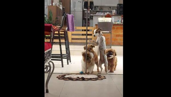 Breaking in Like a Pro: Adorable Fluffy Doggos Team up to Open Glass Door - Sputnik International