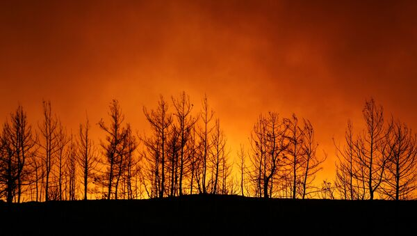 A forest fire burns near the town of Manavgat, east of the resort city of Antalya, Turkey, July 29, 2021. REUTERS/Kaan Soyturk - Sputnik International
