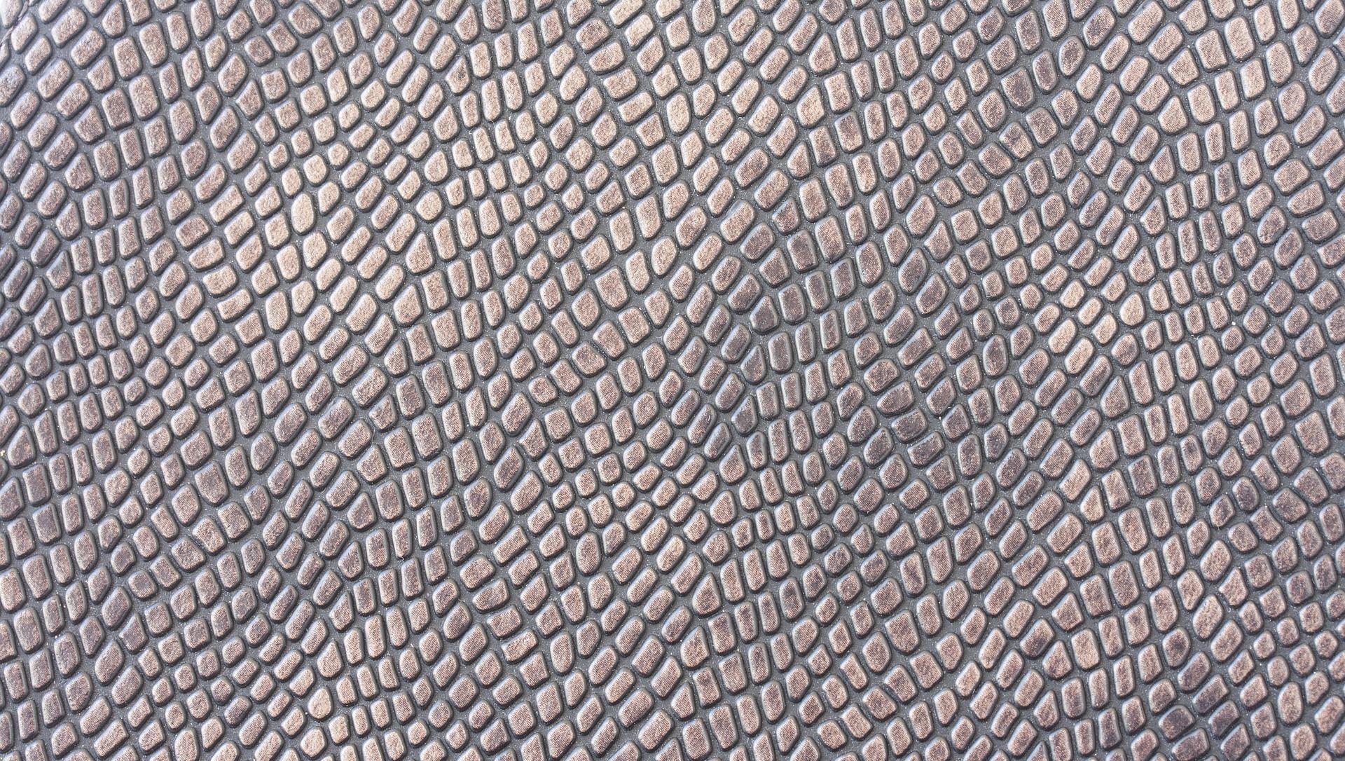 skin of an amphibian - Sputnik International, 1920, 30.07.2021