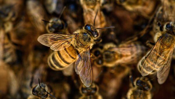 Bees - Sputnik International