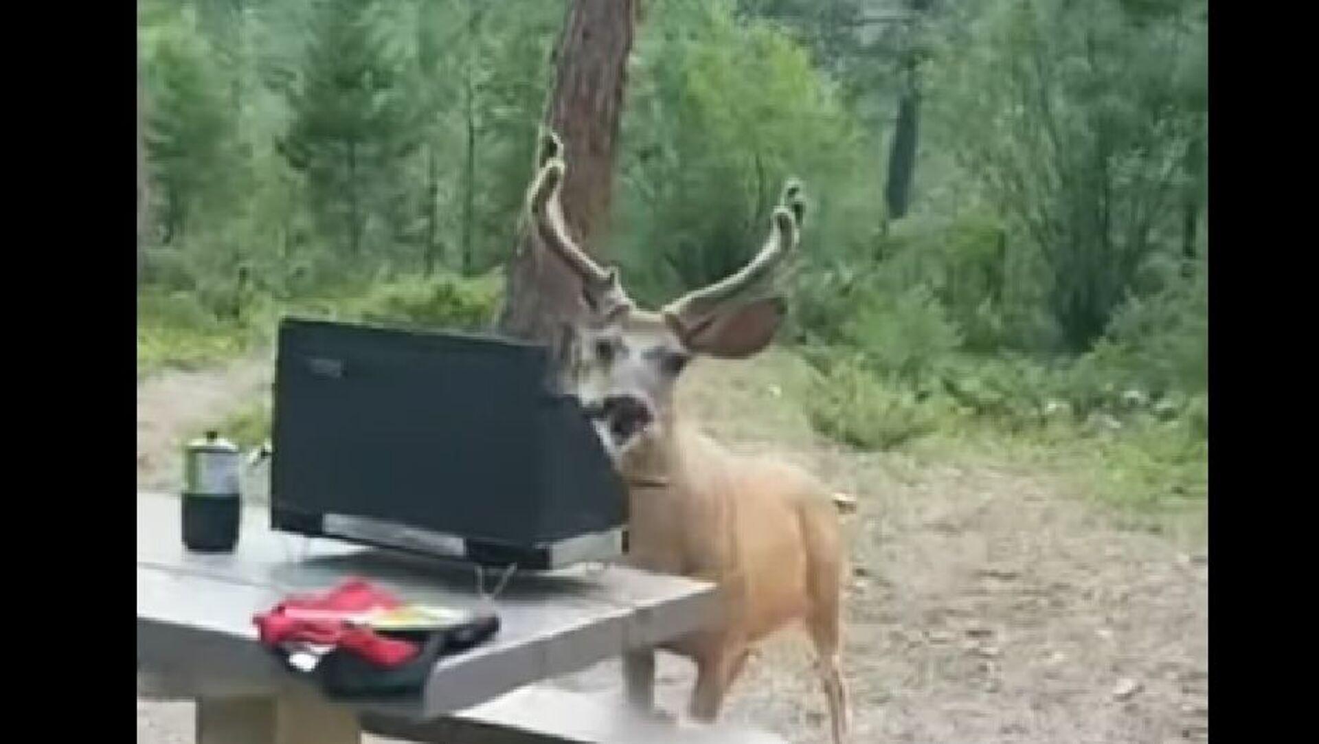 Deer Steals Hotdog - Sputnik International, 1920, 03.08.2021
