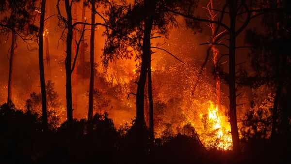 This photograph shows a forest burning as a massive wildfire engulfed a Mediterranean resort at the Marmaris district of Mugla, on August 1 2021.  - Sputnik International
