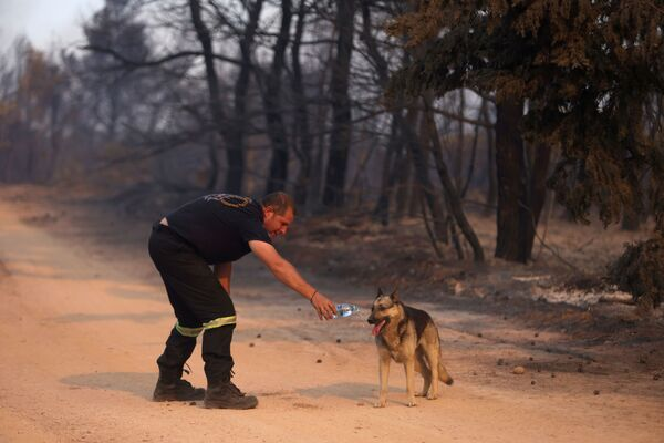 A firefighter gives water to a dog as a wildfire burns in Varympompi, a suburb north of Athens, Greece, 3 August 2021.  - Sputnik International
