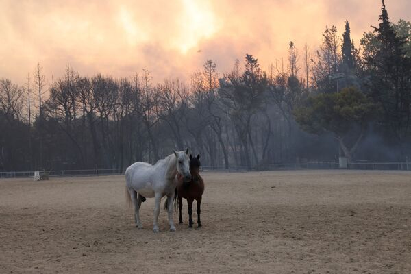 Horses are seen in a farm as a wildfire burns in Varympompi, a suburb north of Athens, Greece, 3 August  2021.  - Sputnik International