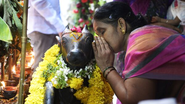 An Indian hindu devotee whispers in the ears of Lord Shiva's Nandi Bull on the occasion of Guru Purnima festival at Sri Sai Baba Temple in Secunderabad, the twin city of Hyderabad on July 27, 2018 - Sputnik International