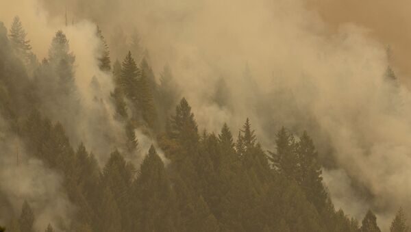Smoke from the Caldor Fire shrouds vegetation near the town of Pollock Pines, California, U.S. August 18, 2021. - Sputnik International