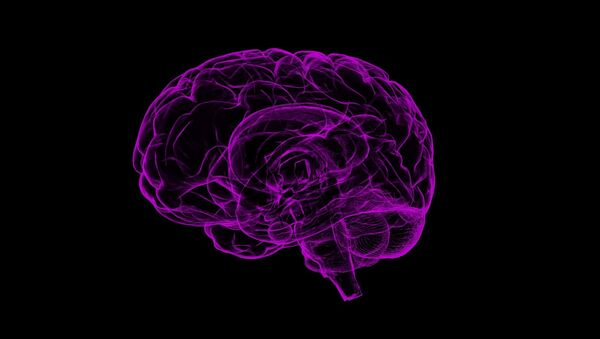 Brain Image - Sputnik International