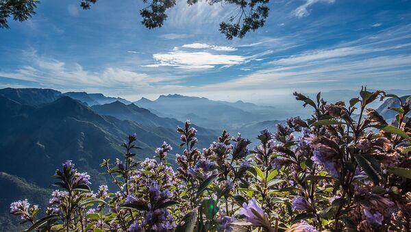 Blooms only once in 12 years, Neelakurinji is a must in every traveller's bucket-list.  - Sputnik International