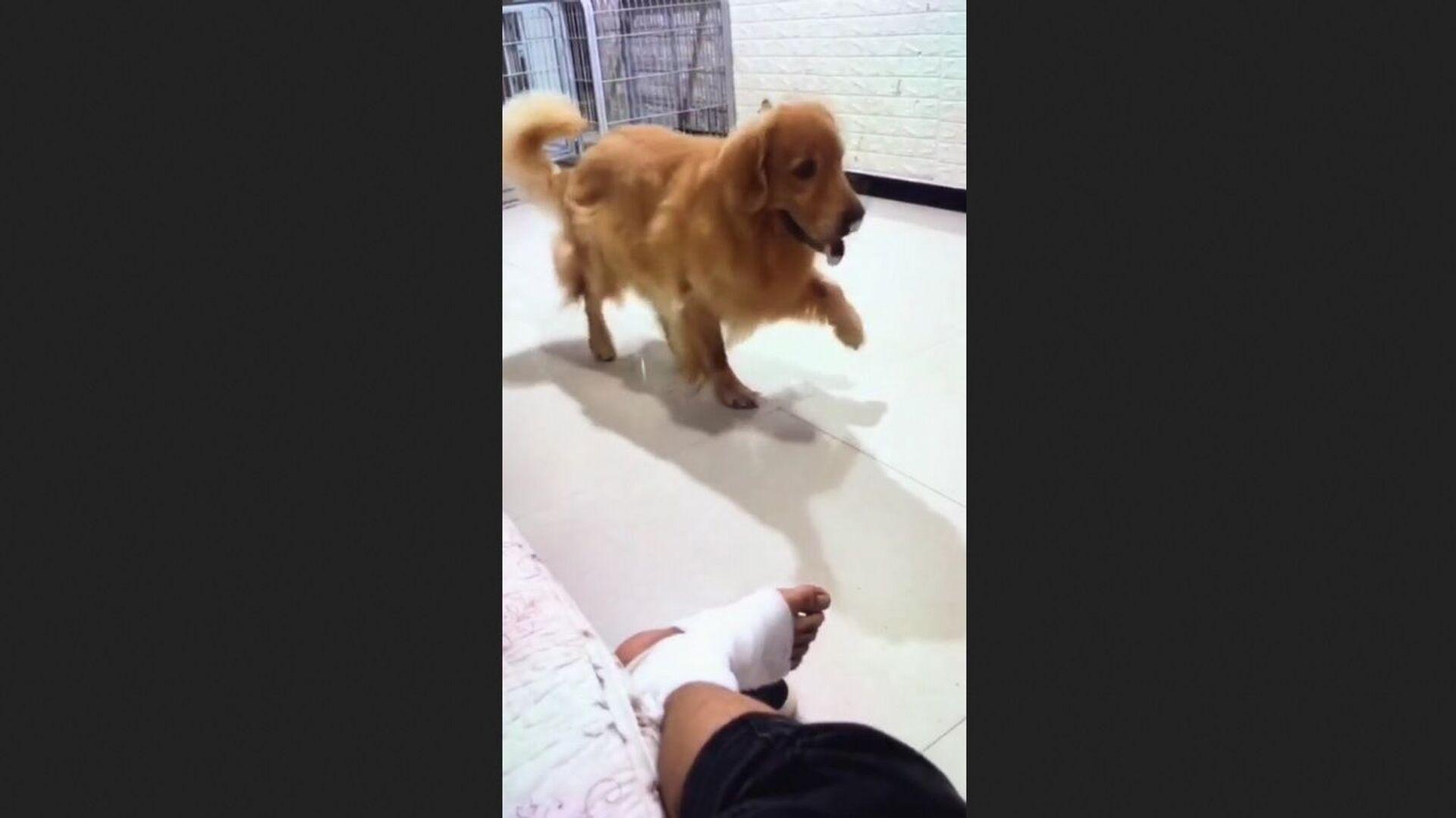 Puppies | Cuteness | Dogs - Sputnik International, 1920, 07.09.2021