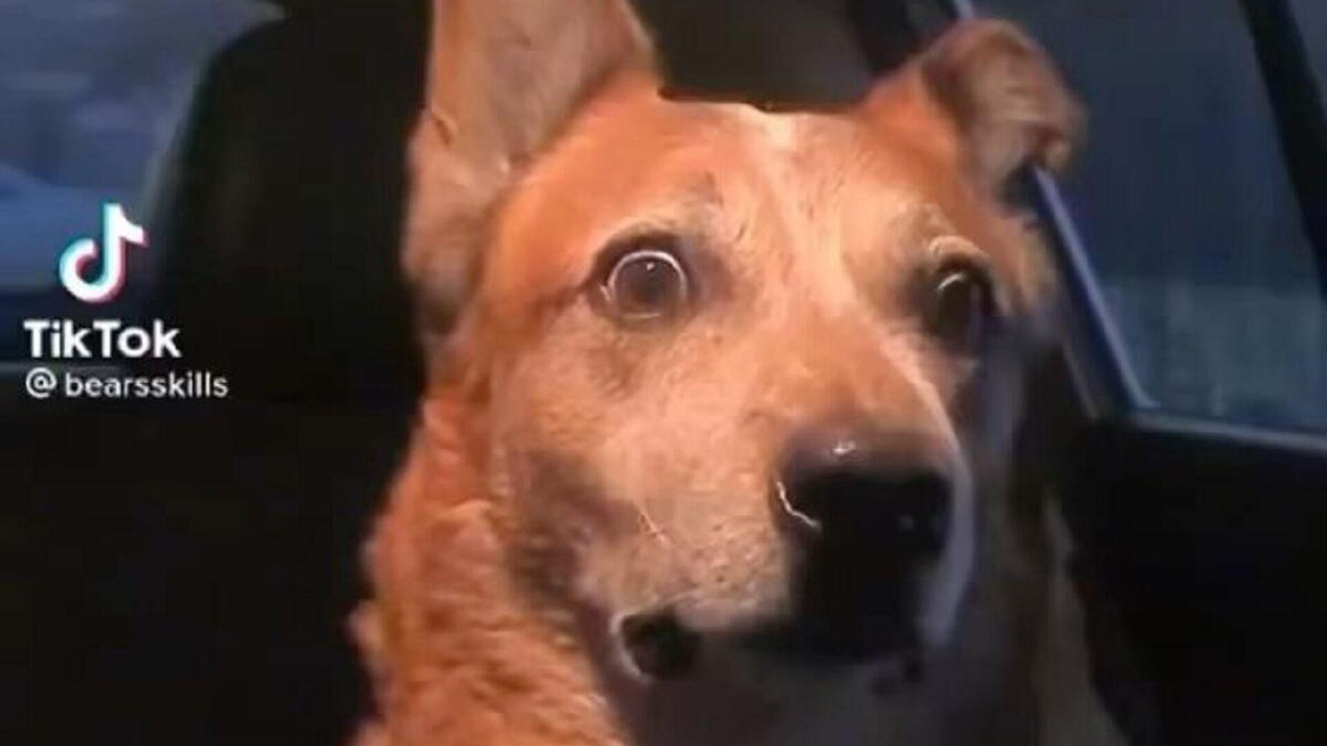 Dog Videos And Dog Pictures - Sputnik International, 1920, 21.09.2021