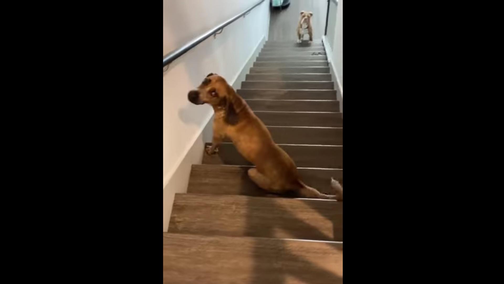 Dog on the stairs - Sputnik International, 1920, 24.09.2021