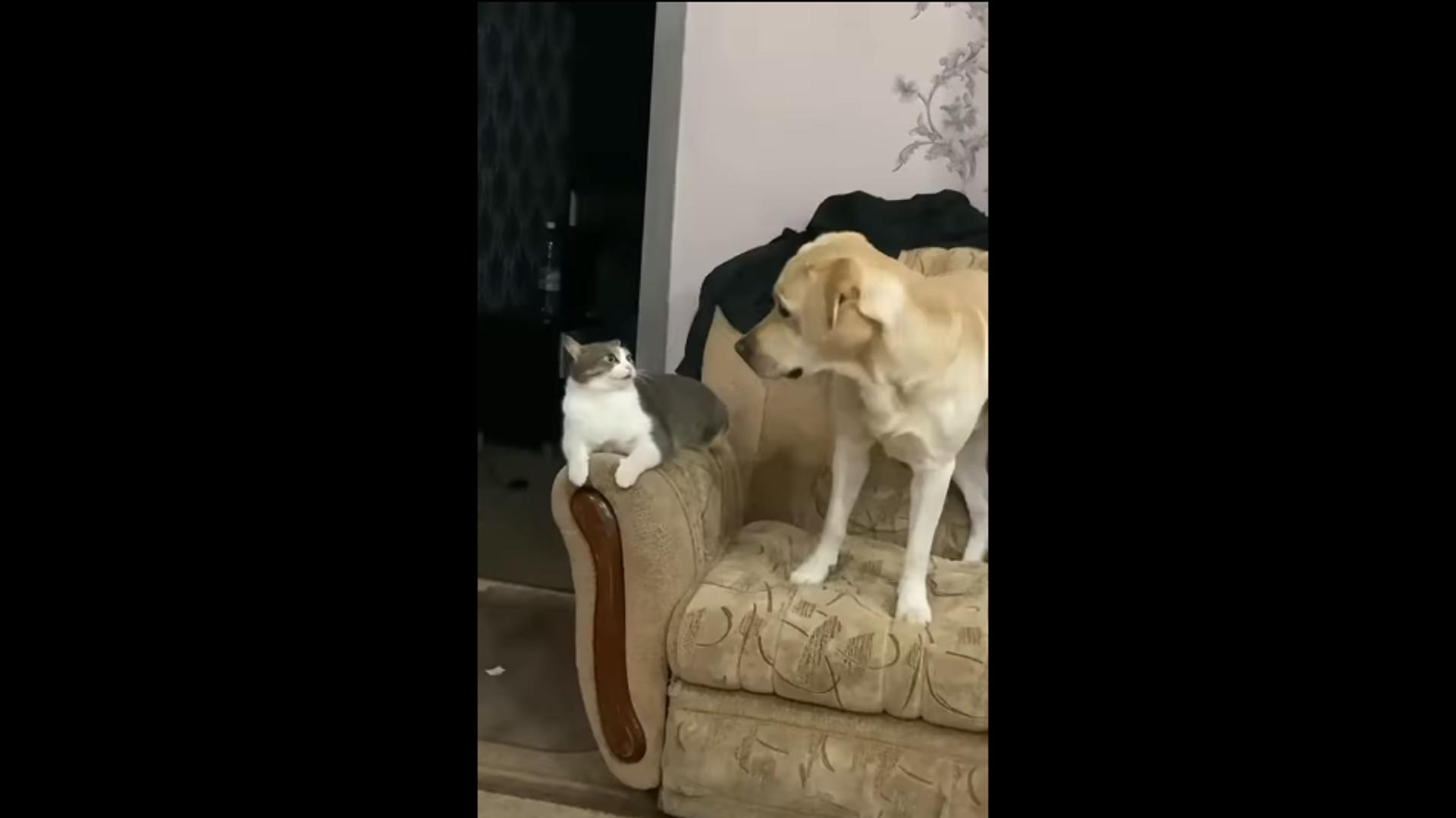 Labrador and a cat - Sputnik International, 1920, 03.10.2021