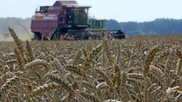 Grain crops harvesting - Sputnik International